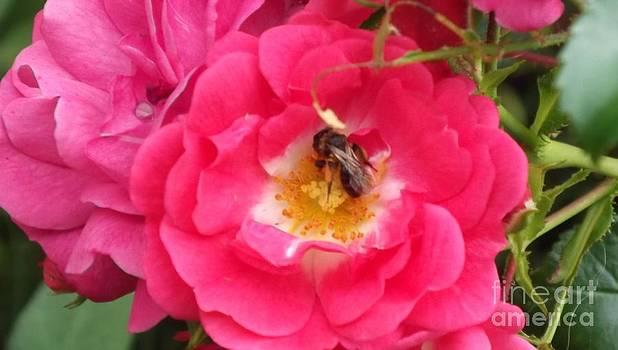 Honey Bee 2 by John Williams