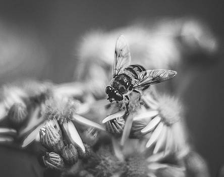Honey bee by April Milani