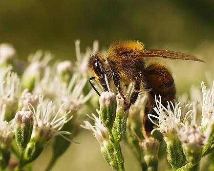 Billy  Griffis Jr - Honey Bee