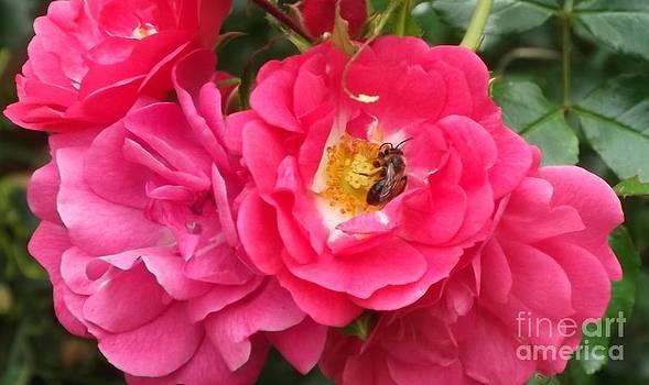 Honey Bee by John Williams