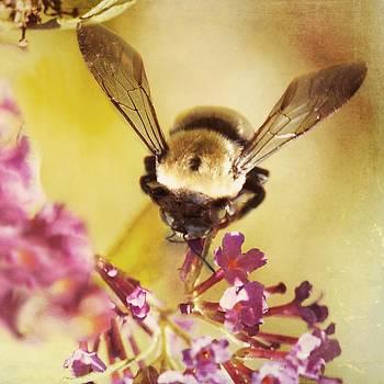 Honey Bee by Kim Fearheiley
