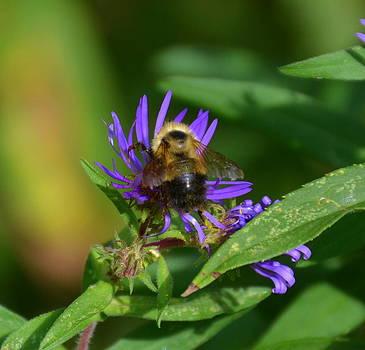 Linda Rae Cuthbertson - Honey Bee