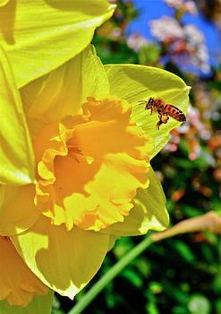 Honey Bee by Mark Lemon