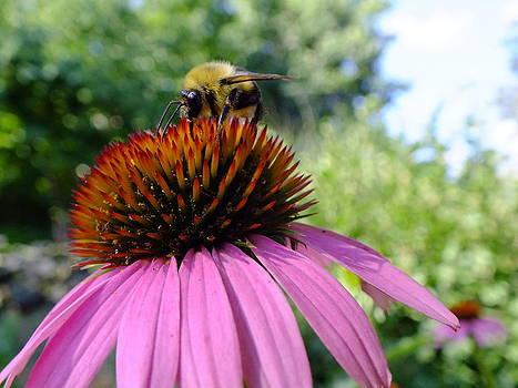 Peggy King - Honey Bee