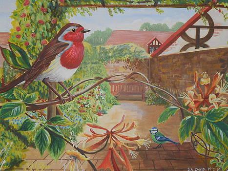 Honey Birds by David Paterson