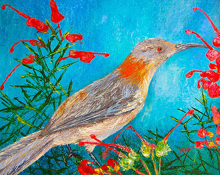 Jan Matson - Honeyeater bird