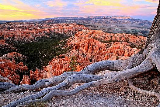 Adam Jewell - Hoodoos In The Canyon