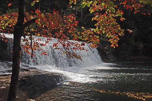 Hooker Falls by Thomas Taylor