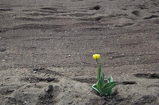 Hope by Kathy Bassett