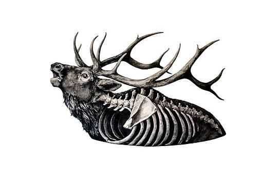 Horns Above Bones Within by Alexander M Petersen