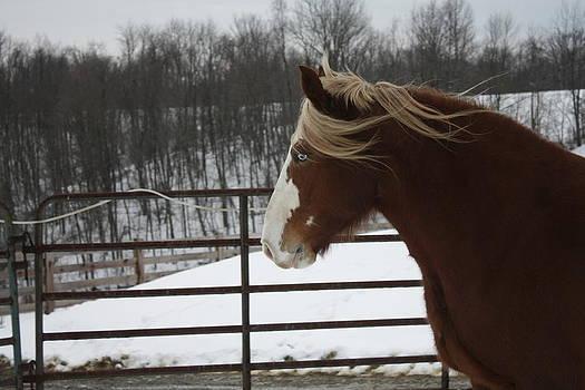 Horse 09 by David Yocum