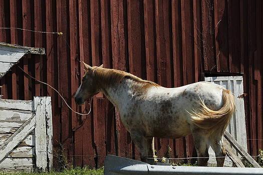 Horse 16 by David Yocum