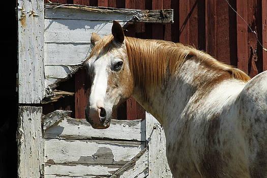 Horse 17 by David Yocum