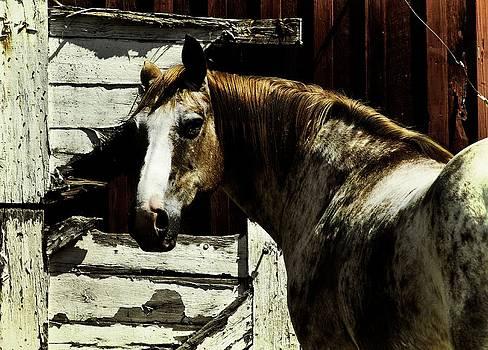 Horse 18 by David Yocum