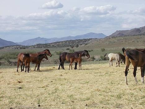 Long Lazy Day by Wynema Ranch