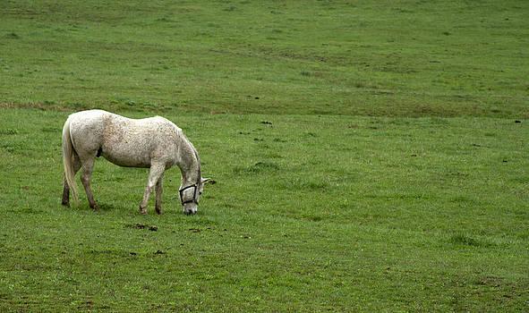 Horse 25 by David Yocum