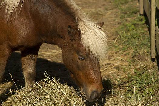 Horse 30 by David Yocum