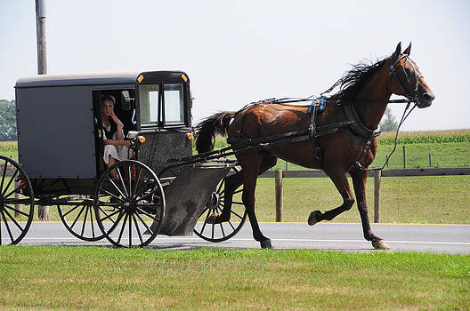 Horse and Buggy by Sharon Sefton