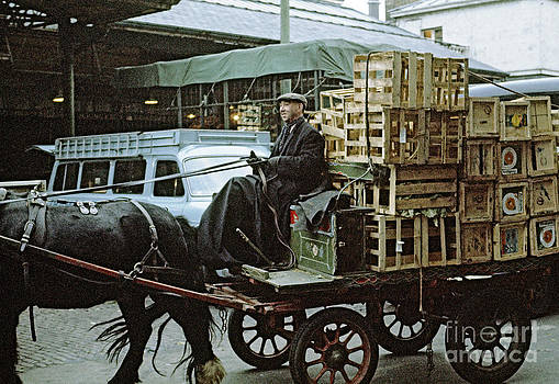 Horse and Cart London 1973 by David Davies