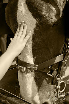 Horse and the hand by Pamela Hymer