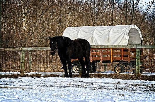 Horse and Wagon by Cheryl Cencich