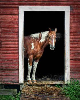 Nikolyn McDonald - Horse - Barn Door