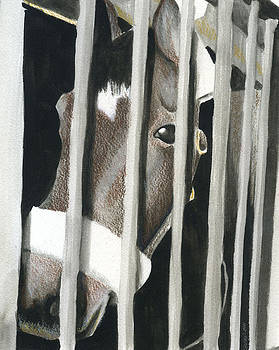 Horse Behind Bars by Christine Winship