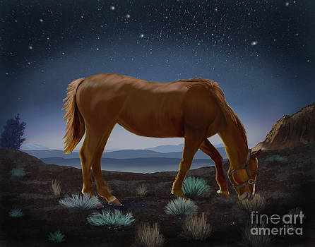 Horse Beneath the Stars by Sydne Archambault