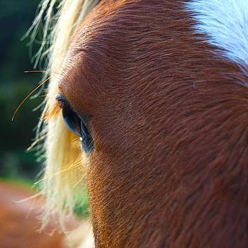Horse close up by Jocelyn Friis