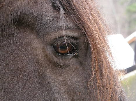 Horse Close Up by  Zoe Hadley