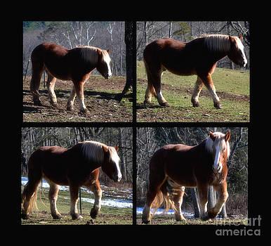 Horse Collage by Eva Thomas