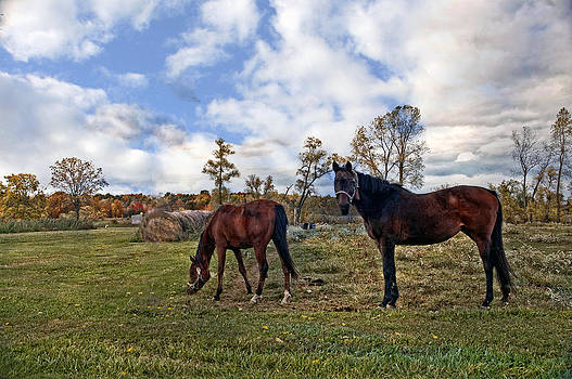 Horse country by Cheryl Cencich