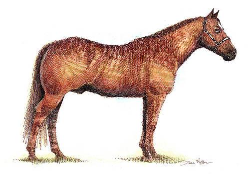 Horse by Dan Nelson