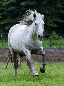 Dee Carpenter - Horse