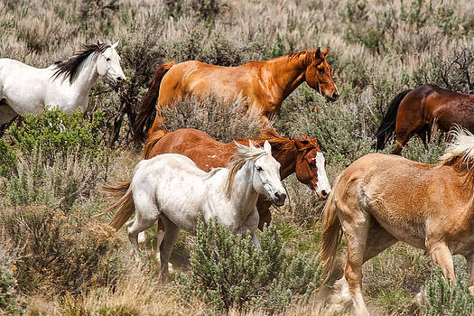 John McArthur - Horse Drive Chaos 2