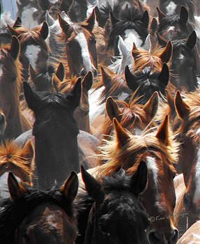 Kae Cheatham - horse ears