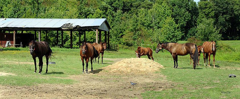 Horse Farm by Carolyn Ricks