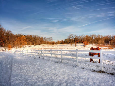 Horse Farm by Jenny Ellen Photography