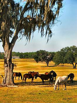 Horse Farm by Judy  Waller