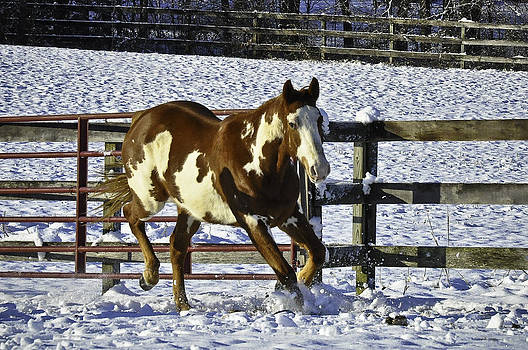 Horse galloping in snow. by Brian R Tolbert