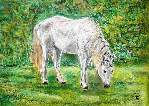 Horse grazing  by Igor Kotnik