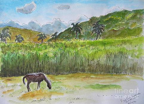 John Malone - Horse Grazing with Sugar Cane Field in Background