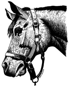 Horse Head by Earl Weldon