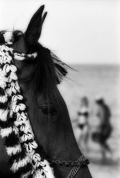 Isaac Silman - Horse head
