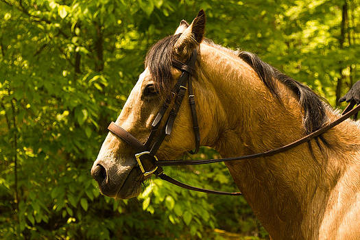 Horse head by Tibor Co