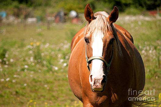 Gwyn Newcombe - Horse Howdy