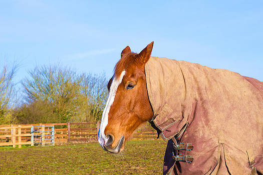 Fizzy Image - Horse in field wearing horse rug