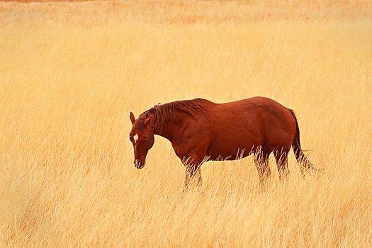 Dana Sohr - Horse in Meadow - Capitol Reef Park - Utah