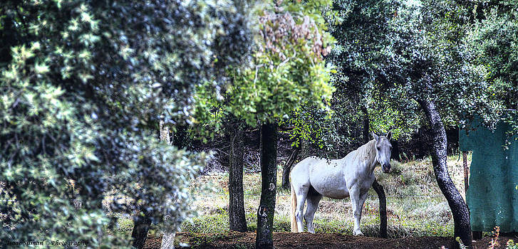 Isaac Silman - Horse in meadow