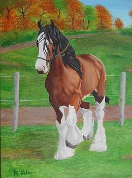 Horse in the field by Raymundo Urbina